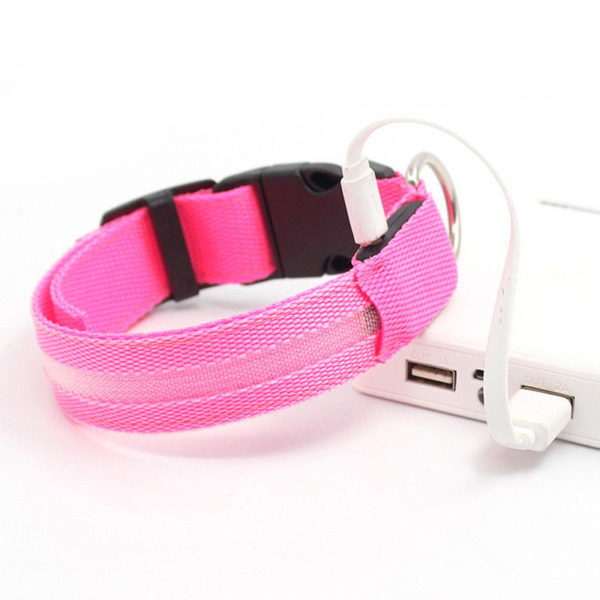 LED Safety Collar PINK