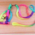 Rainbow Leash and Harness